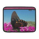 Mariposa de Spicebush Swallowtail Funda MacBook
