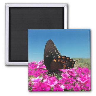 Mariposa de Spicebush Swallowtail Imanes De Nevera