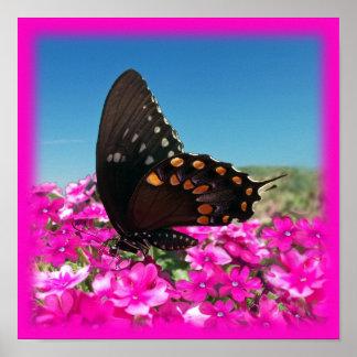 Mariposa de Spicebush Swallowtail Póster
