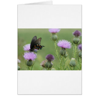 Mariposa de Spicebush Swallowtail - troilus de Pap Tarjeta De Felicitación