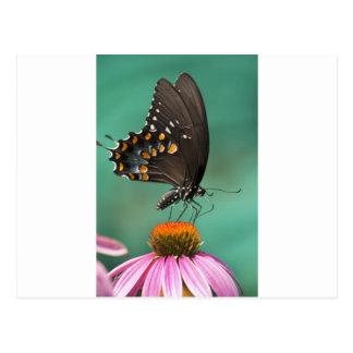 Mariposa de Spicebush Swallowtail - troilus de Pap Postales