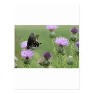Mariposa de Spicebush Swallowtail - troilus de Tarjeta Postal
