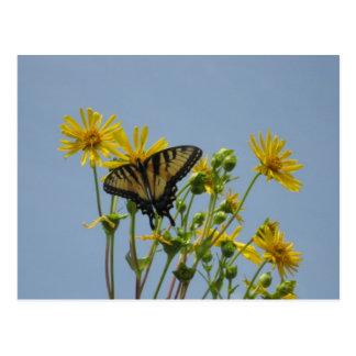 Mariposa de Swallowtail contra un cielo azul Postales