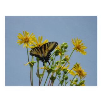 Mariposa de Swallowtail contra un cielo azul Postal
