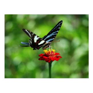 Mariposa de Swallowtail de la cebra en la postal r