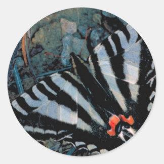Mariposa de Swallowtail de la cebra Etiqueta Redonda