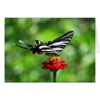 Mariposa de Swallowtail de la cebra Tarjeta De Felicitación
