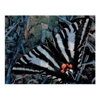 Mariposa de Swallowtail de la cebra Postal