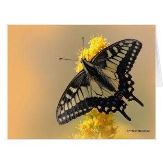 Mariposa de Swallowtail del anís en el Sun