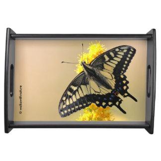 Mariposa de Swallowtail del anís en el Sun Bandejas