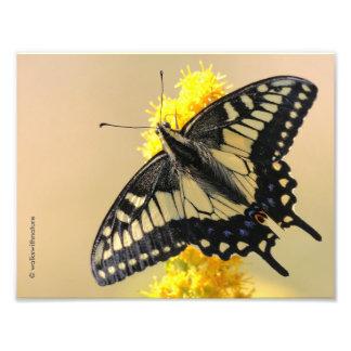 Mariposa de Swallowtail del anís en el Sun Fotografía