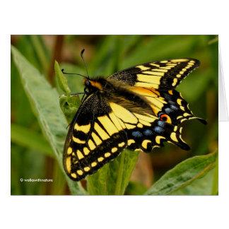 Mariposa de Swallowtail del anís en la hierba