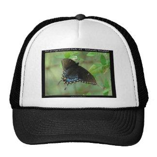 Mariposa de Swallowtail del parque nacional de las Gorro De Camionero