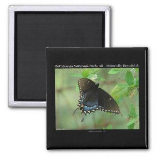 Mariposa de Swallowtail del parque nacional de las Imán Cuadrado
