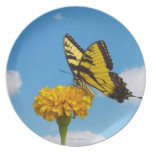 Mariposa de Swallowtail del tigre en una flor Platos
