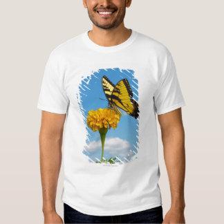Mariposa de Swallowtail del tigre en una flor Remeras