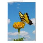Mariposa de Swallowtail del tigre en una flor Felicitacion