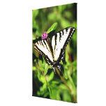Mariposa de Swallowtail del tigre. Papilio glacus. Impresiones De Lienzo