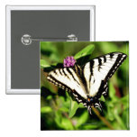 Mariposa de Swallowtail del tigre. Papilio glacus. Pin Cuadrado