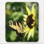 Mariposa de Swallowtail del tigre Alfombrillas De Ratón