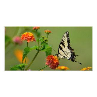 Mariposa de Swallowtail del tigre Tarjeta Fotografica