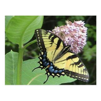 Mariposa de Swallowtail del tigre Tarjeta Postal