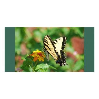 Mariposa de Swallowtail del tigre Tarjetas Personales Con Fotos