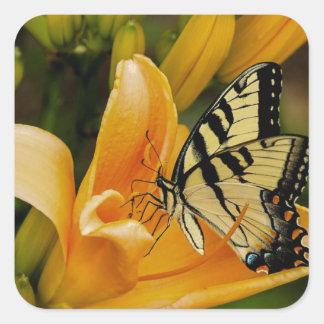Mariposa de Swallowtail del Viejo Mundo Pegatina Cuadrada