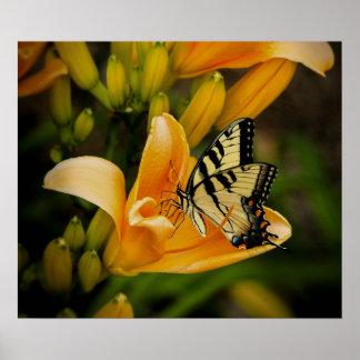 Mariposa de Swallowtail del Viejo Mundo Póster