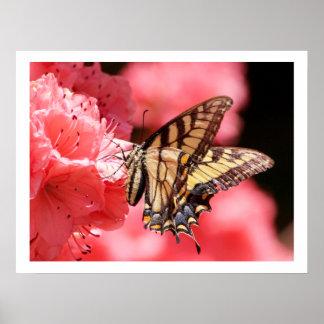 Mariposa de Swallowtail en azalea rosada Póster