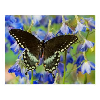 Mariposa de Swallowtail en azul Tarjetas Postales