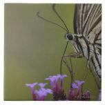 Mariposa de Swallowtail en la flor, Chiba Azulejo Cuadrado Grande