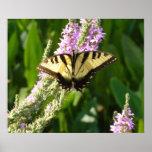 Mariposa de Swallowtail en la impresión púrpura de Poster