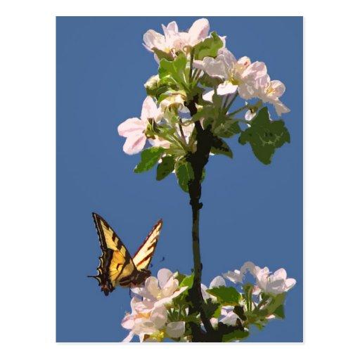 Mariposa de Swallowtail en los flores de Apple Tarjetas Postales