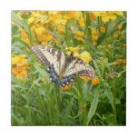 Mariposa de Swallowtail en los Wallflowers siberia Tejas Cerámicas