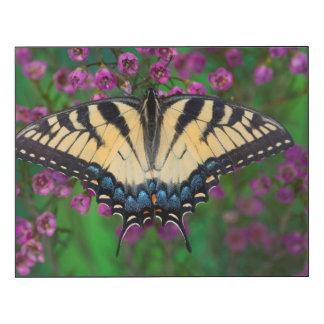 Mariposa de Swallowtail en púrpura Impresión En Madera