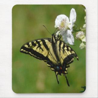 Mariposa de SwallowTail en un flor de Blackberry Tapetes De Raton