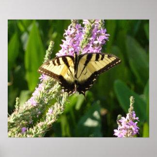 Mariposa de Swallowtail en Wildflowers púrpuras Póster