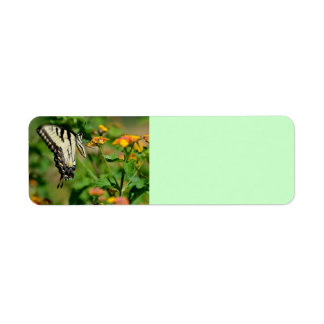 Mariposa de Swallowtail Etiqueta De Remitente