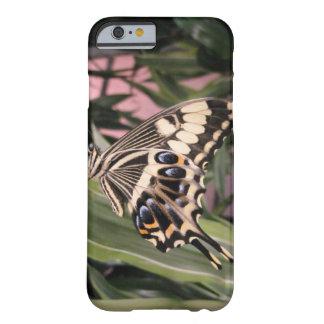 Mariposa de Swallowtail Funda Barely There iPhone 6