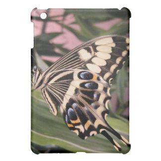 Mariposa de Swallowtail
