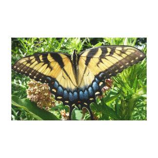 Mariposa de Swallowtail II en Shenandoah Impresión En Lienzo