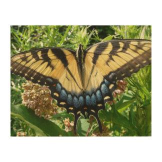 Mariposa de Swallowtail II en Shenandoah Impresiones En Madera
