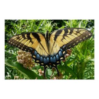 Mariposa de Swallowtail II en Shenandoah Perfect Poster