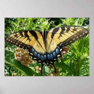 Mariposa de Swallowtail II en Shenandoah Póster