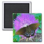 Mariposa de Swallowtail, imán púrpura de la flor d