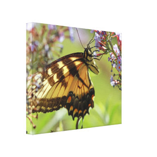Mariposa de Swallowtail Impresión De Lienzo