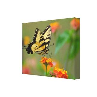 Mariposa de Swallowtail Impresión En Lona