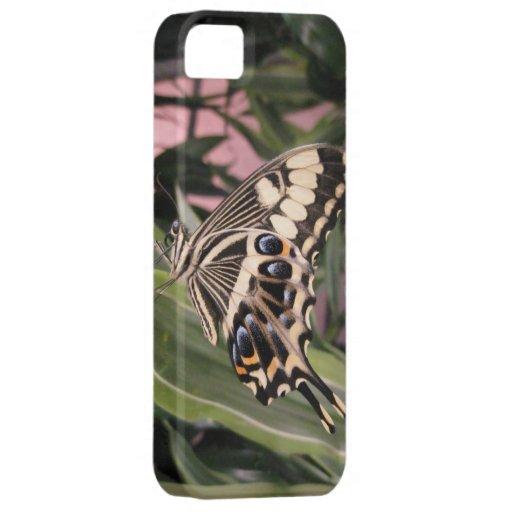 Mariposa de Swallowtail iPhone 5 Protectores