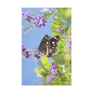 Mariposa de Swallowtail Lona Envuelta Para Galerías